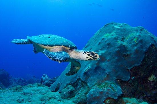 جزر السلاحف ولاية صباح ماليزيا 9