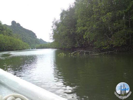 رحلة المانغروف في لنكاوي Mangrove