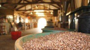مصنع القهوة في جزيرة بينانج