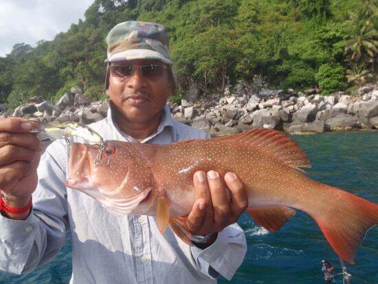 سمكة هامور