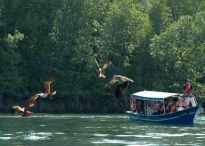 Langkawi-Mangrove-Eagle-Area